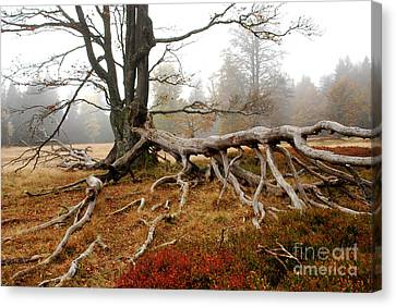 Rootage Canvas Print by Karin Stein