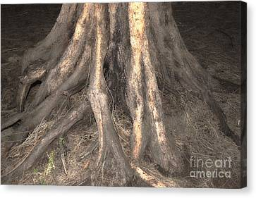 Roots Canvas Print by Cassandra Buckley