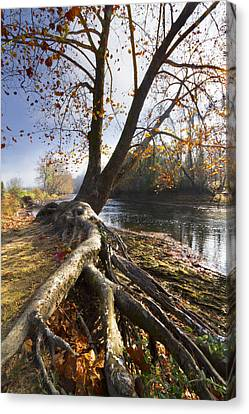 Roots Canvas Print by Debra and Dave Vanderlaan