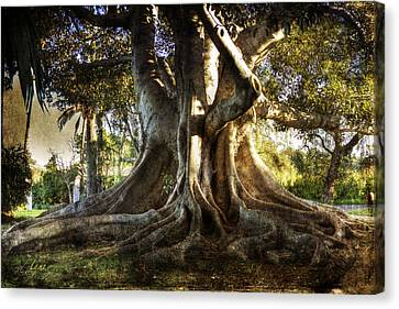Roots Canvas Print by George Lenz