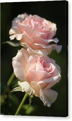Rosa 'johann Strauss' Flowers Canvas Print