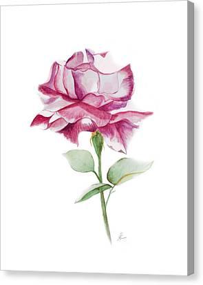 Rose 2 Canvas Print by Nancy Edwards