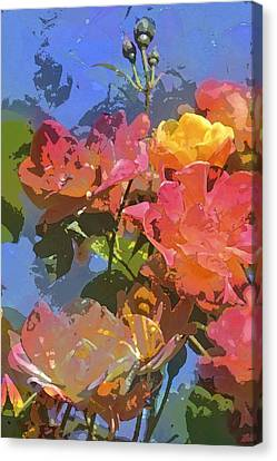 Rose 208 Canvas Print by Pamela Cooper