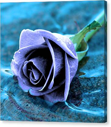 Rose In Water  Canvas Print