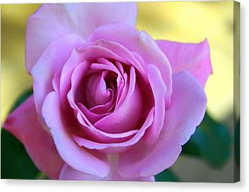 Canvas Print featuring the photograph Roses by Denise Moore