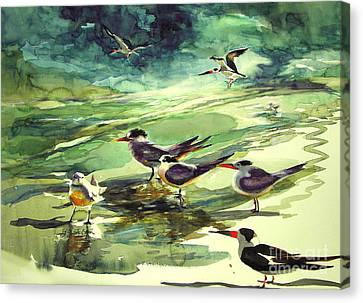 Royal Terns And Black Skimmers Canvas Print by Julianne Felton