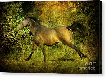 Bay Horse Canvas Print - Running Free by Angel  Tarantella