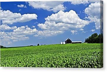 Rural Landscape Canvas Print by Elena Elisseeva
