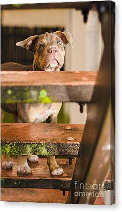 Sad Lost Puppy Dog Looking Up Steps Of A House Canvas Print by Jorgo Photography - Wall Art Gallery
