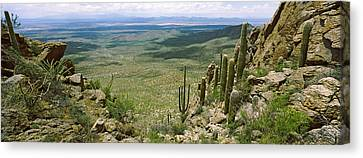 Spiny Canvas Print - Saguaro Cactus On A Hillside, Tucson by Panoramic Images