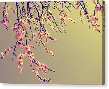 Sakura Canvas Print by Marianna Mills