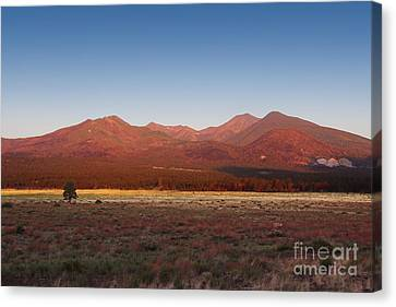 Canvas Print featuring the photograph San Francisco Peaks Sunrise by Jemmy Archer