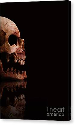 Scary Skull Canvas Print by Jorgo Photography - Wall Art Gallery