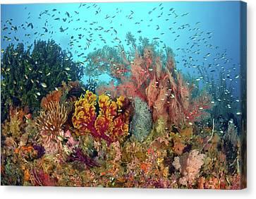 Scenic Of Diverse Reef Life, Misool Canvas Print