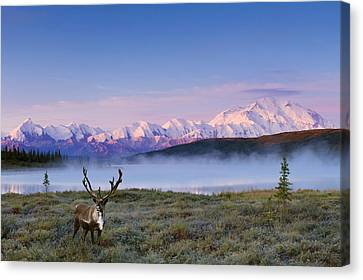 Scenic View Of Mt. Mckinley And Wonder Canvas Print by Michael DeYoung