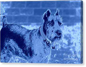 Schnauzer Canvas Print by Mickey Harkins