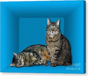Schrodingers Cat, Artwork Canvas Print
