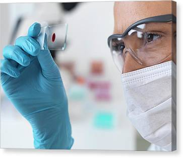 Scientist With Microscope Slide Canvas Print