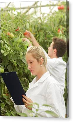 Scientists Examining Tomatoes Canvas Print by Gombert, Sigrid