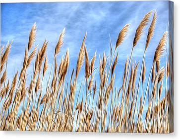 Salt Air Canvas Print - Sea Breeze by Kelvin Booker