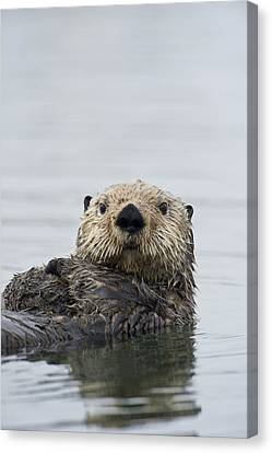 Otter Canvas Print - Sea Otter Alaska by Michael Quinton