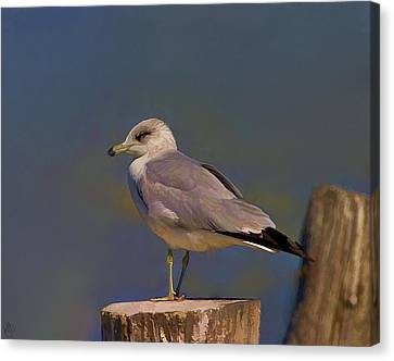 Seagull Canvas Print by Hazel Billingsley