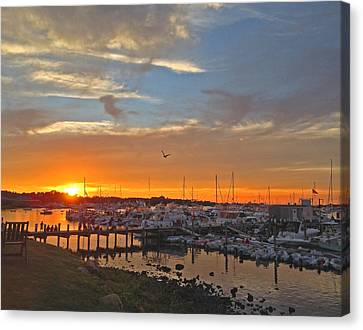 Seagull Sunset Canvas Print by Todd Breitling