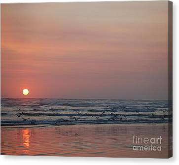 Seagulls At Sunset Canvas Print by Chuck Flewelling