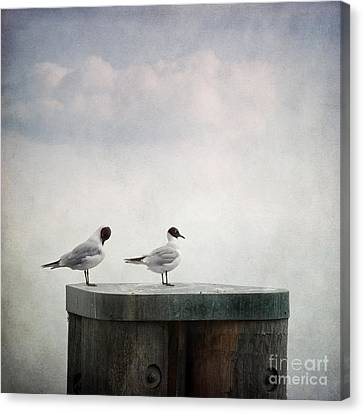 White Birds Canvas Print - Seagulls by Priska Wettstein