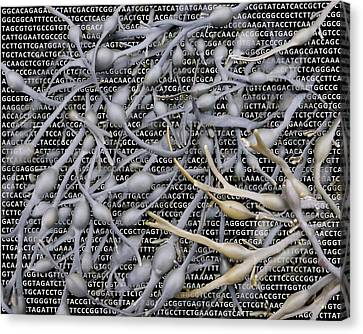 Seaweed And Its Dna Canvas Print by Robert Brook