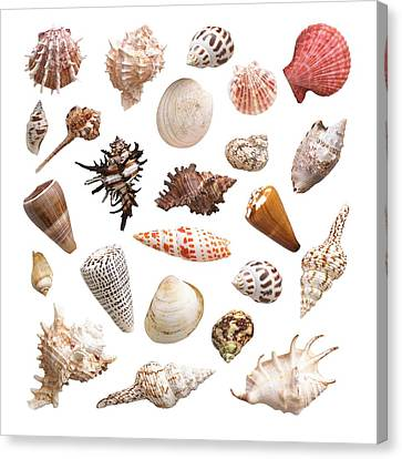 Selection Of Sea Shells Canvas Print by Science Photo Library