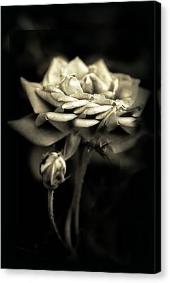 Sepia Rose Canvas Print by Jessica Jenney