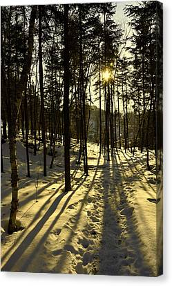 Shadows Canvas Print by Robert Knight