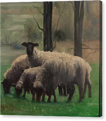 Sheep Family Canvas Print by John Reynolds
