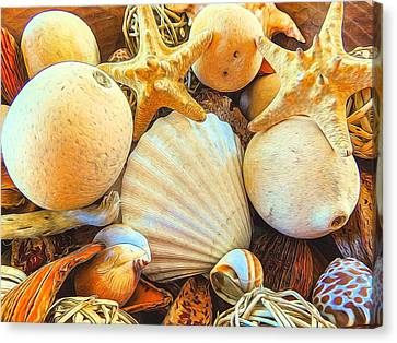 Shells Canvas Print by Denise Darby