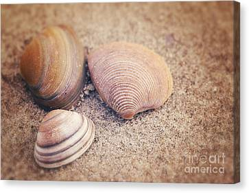 Shells  Canvas Print by LHJB Photography