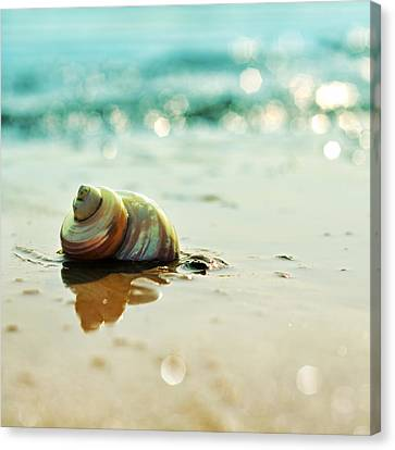 Shore Dweller Canvas Print by Laura Fasulo