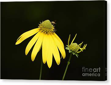 Simple Things Canvas Print by Randy Bodkins