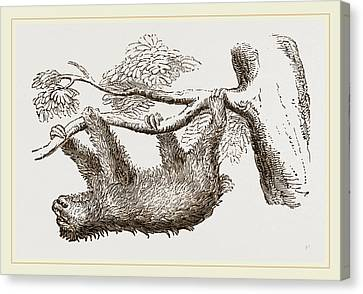 Sloth Canvas Print by Litz Collection