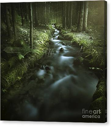 Small Stream In A Forest, Pirin Canvas Print by Evgeny Kuklev