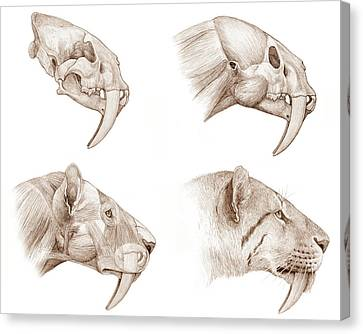 Smilodon Sabre-toothed Cat Canvas Print by Mauricio Anton