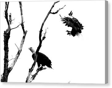 Sneak Up Canvas Print