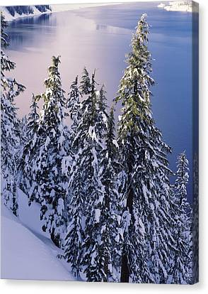 Snow Covered Trees At South Rim, Crater Canvas Print