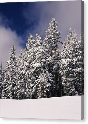 Snow Covered Western Hemlock And Fir Canvas Print by Panoramic Images