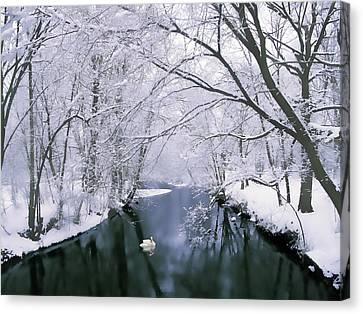 January Canvas Print - Snow Swan by Jessica Jenney