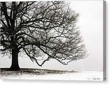 Snow Tree 2010 Canvas Print
