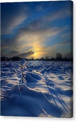 Snow Way Canvas Print by Phil Koch