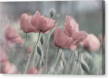 Softly Canvas Print by Anne Worner