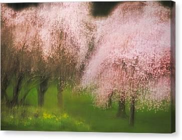 Softly Spoken Canvas Print