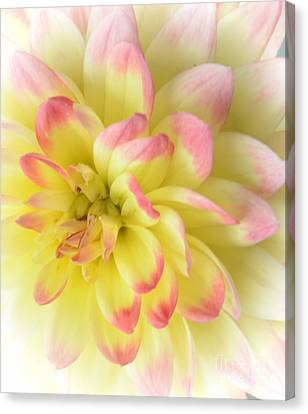 Softness Canvas Print by Kathleen Struckle